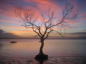 Albero, tramonto e laguna in Mozambico